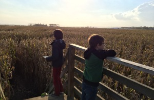 new york fall corn maze long island
