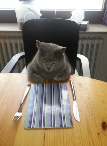 cat eating dinner