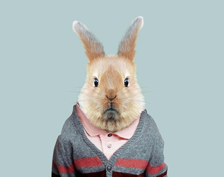 European-Rabbit-Oryctolagus-Cuniculus-copia