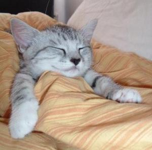 sleep-kitten-14